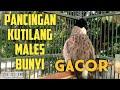 Suara Pancingan Kutilang Biar Gacor Kutilang Males Bunyi Jadi Gacor  Mp3 - Mp4 Download
