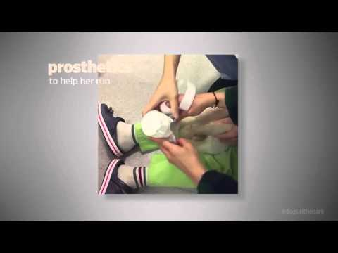 Пёсик, которого чуть не съели в Корее, получил протезы лап