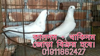 Kaldom + Khakidom pair for sell(বিক্রয় হবে)