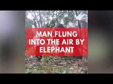 Man flung into the air  elephant
