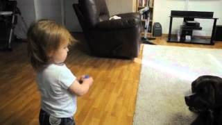 Toddler Playing Fetch with Boxer thumbnail