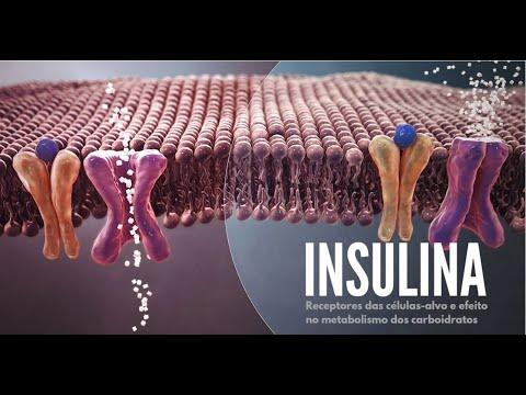 diabetes-e-exercício-físico-|-aula-#3-|-efeito-da-insulina-nos-carboidratos-|-profa.-marcela-nolêto