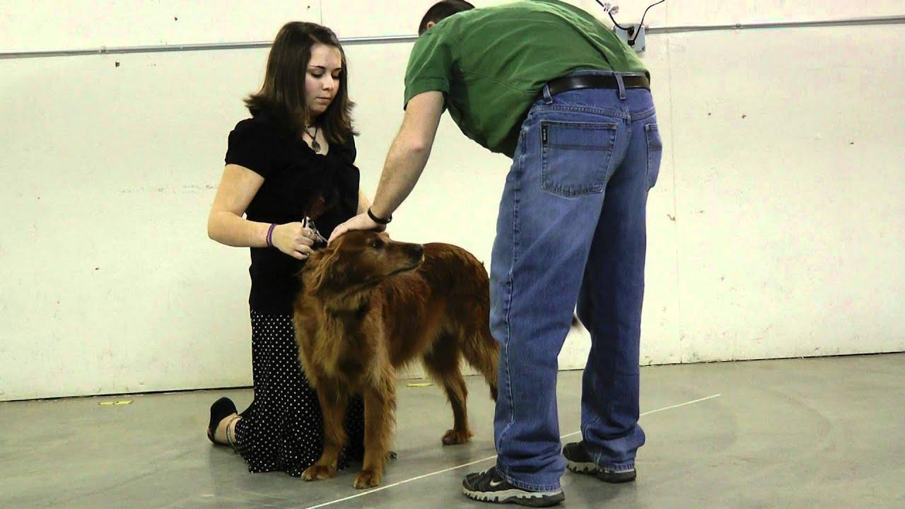 3a Introduction To Dog Showmanship Oregon 4 H Dog Project