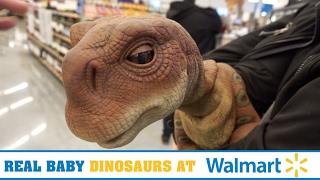 REAL BABY DINOSAURS at WALMART!