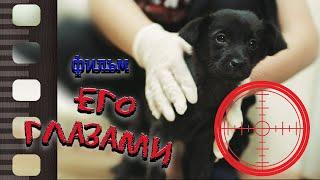 Фильм о возможной трагедии и спасении Его глазами скажем НЕТ жестокому обращению с животными