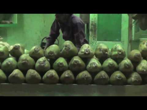 kerala coconut shop