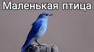 Маленькая птица  (психотерапия творческим самовыражением)