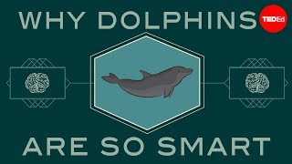 How Smart Are Dolphins? - Lori Marino