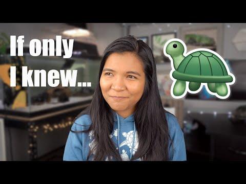 What I Wish I Knew BEFORE I Got A Turtle