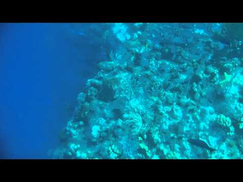 """Snorkeling """"The Wall"""" in Grand Turk"""