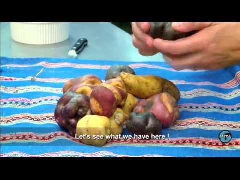 Peru: The Food Revolution - UN Stories