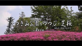 福島の花めぐりより ~二本松市 さつき山公園 つつじ・芝桜~