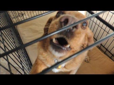 Aggressive Dog Before & After Dog Whispering BIG CHUCK MCBRIDE - DOG INTERVENTION