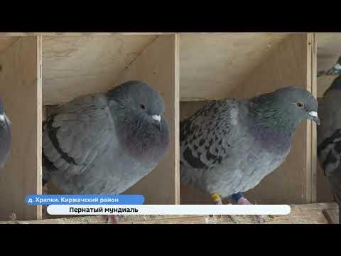 Голубедром в Киржаче