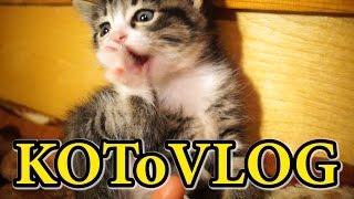 КОШКА И КОТЯТА Видео Для Детей КОШКИ И КОТЫ Funny Cats and Kittens