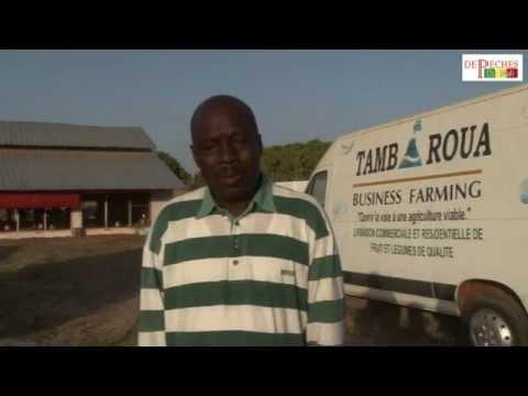 Interview Abdoulaye Niang  parle de la technologie et du business plan de la Ferme Nandi
