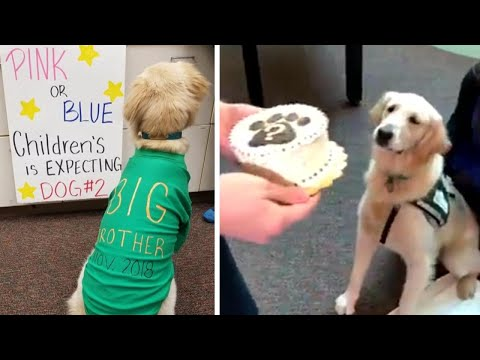 Therapy Dog Helps Reveal Gender of Nebraska Hospital's New P