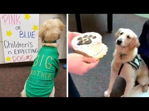 Kat Jackson - Therapy Dog Gender Reveal