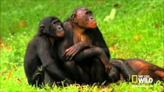 Seksi Maymunlar Çiftleşiyor Sesli Komedi Erzurum Şivesi
