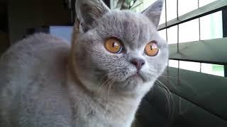 Приколы с котами смешно до слез