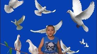 Почтовый голубь. Как я спас голубя(Почтовый голубь. Как я спас голубя., 2016-12-26T09:27:07.000Z)