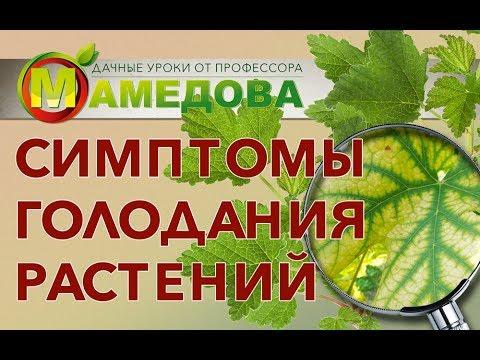 Симптомы голодания растений