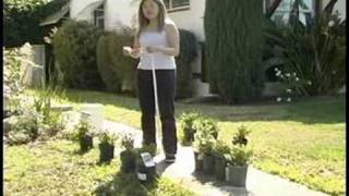 Planting Japanese Boxwoods : Spacing Japanese Boxwoods
