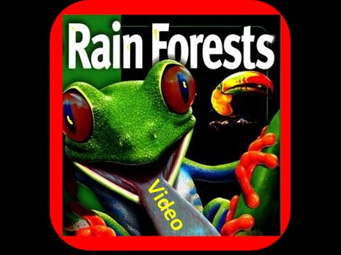 Rainforest for Kids - Biome Facts ,Layers,Animals,Flora
