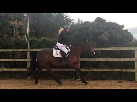 Perfect Mother/Daughter Share, Riding Club or Pony Club For Sale