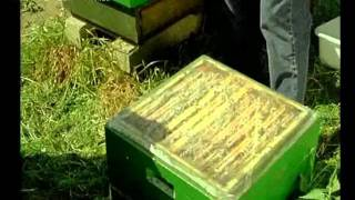 Пчеловодство. Ротационное разведение пчел часть1.(Э.Б)(пчеловодство., 2011-09-13T22:42:16.000Z)