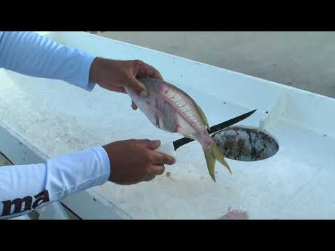 How To Fillet Yellowtail Snapper - Dexter Outdoors