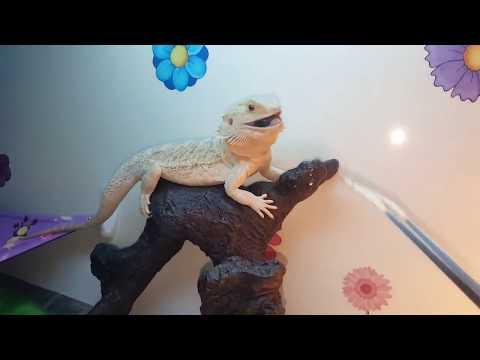 Funniest Pet Reactions & Bloopers of November   Funny Pet Videos