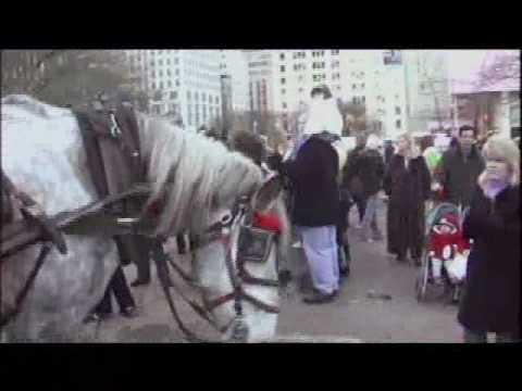 Horse Drawn Carriage Cruelty