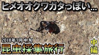 7月中旬昆虫採集旅行2日目に樹海のポイントに行ってきました。 ※トラ...