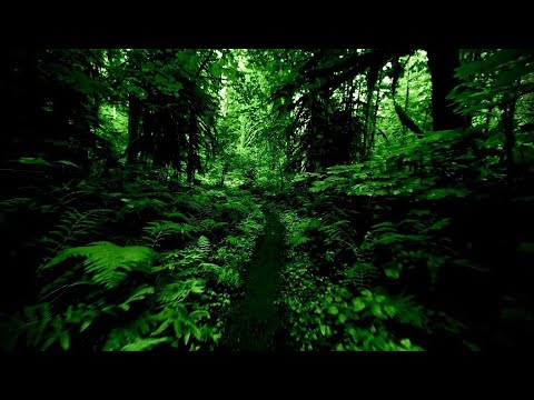 The Cure - A Forest - Lyrics video