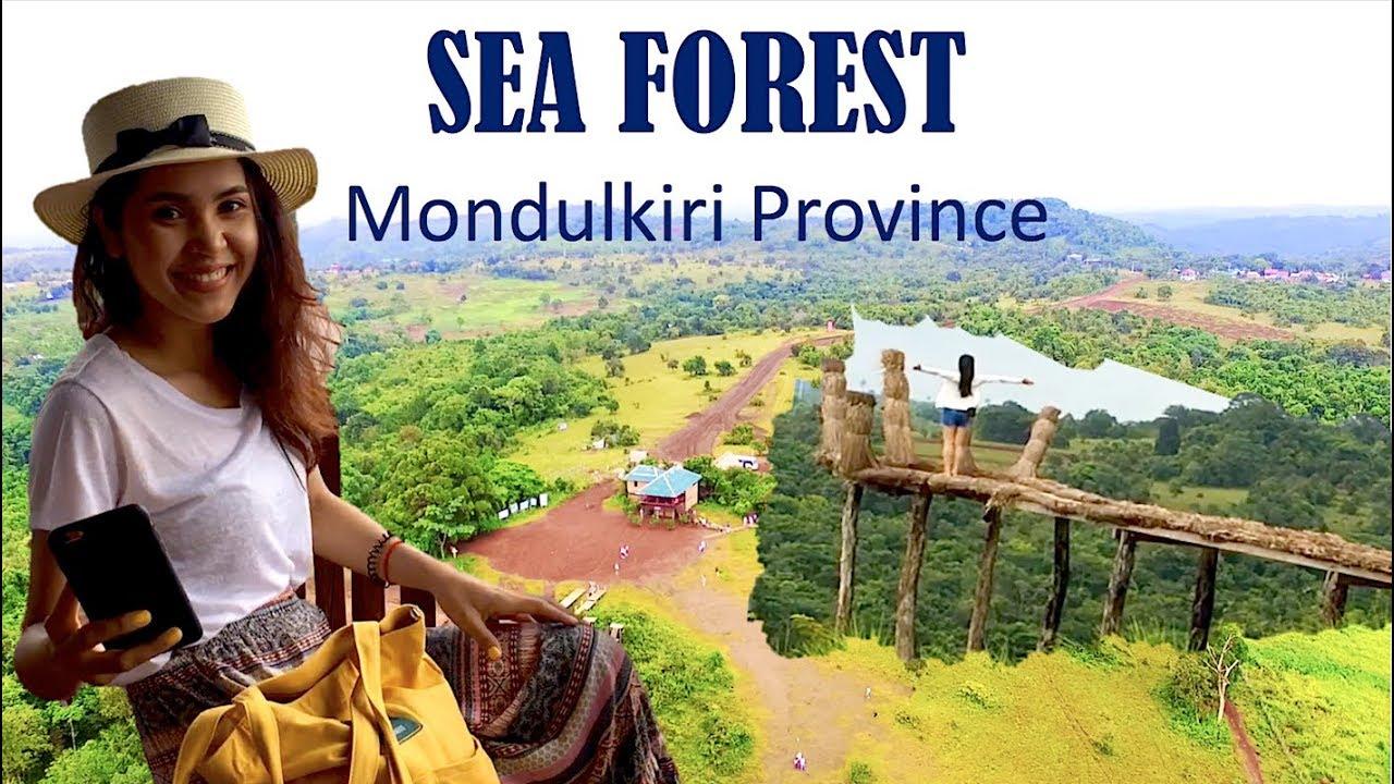 Kết quả hình ảnh cho sea forest mondulkiri