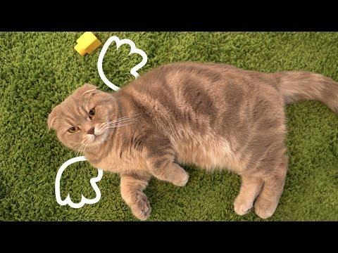 세상 착한 천사 고양이 이즈
