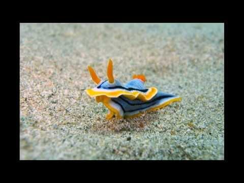 Underwater Apo Island / Philippines 2013 [HD]