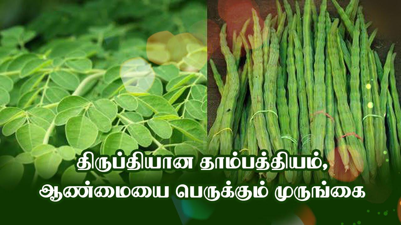 Image result for முருங்கை ஓர் இயற்கை வயாகரா