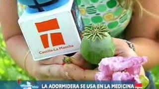 CLM en Vivo: Adormidera en Malpica de Tajo