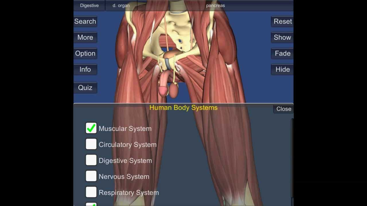 Human anatomy videos