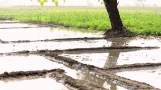 Farmers : Water Conservation in Agriculture