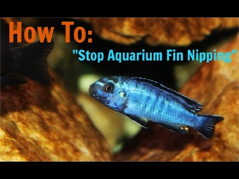 How To Prevent Aquarium Fin Nipping