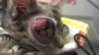 Coraline Vet Visit 4/27/13 - Feline Rescue Association