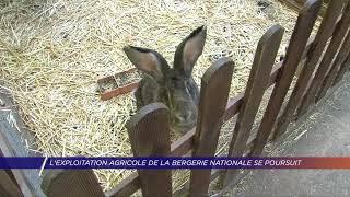 Yvelines | L'exploitation agricole de la Bergerie Nationale se poursuit