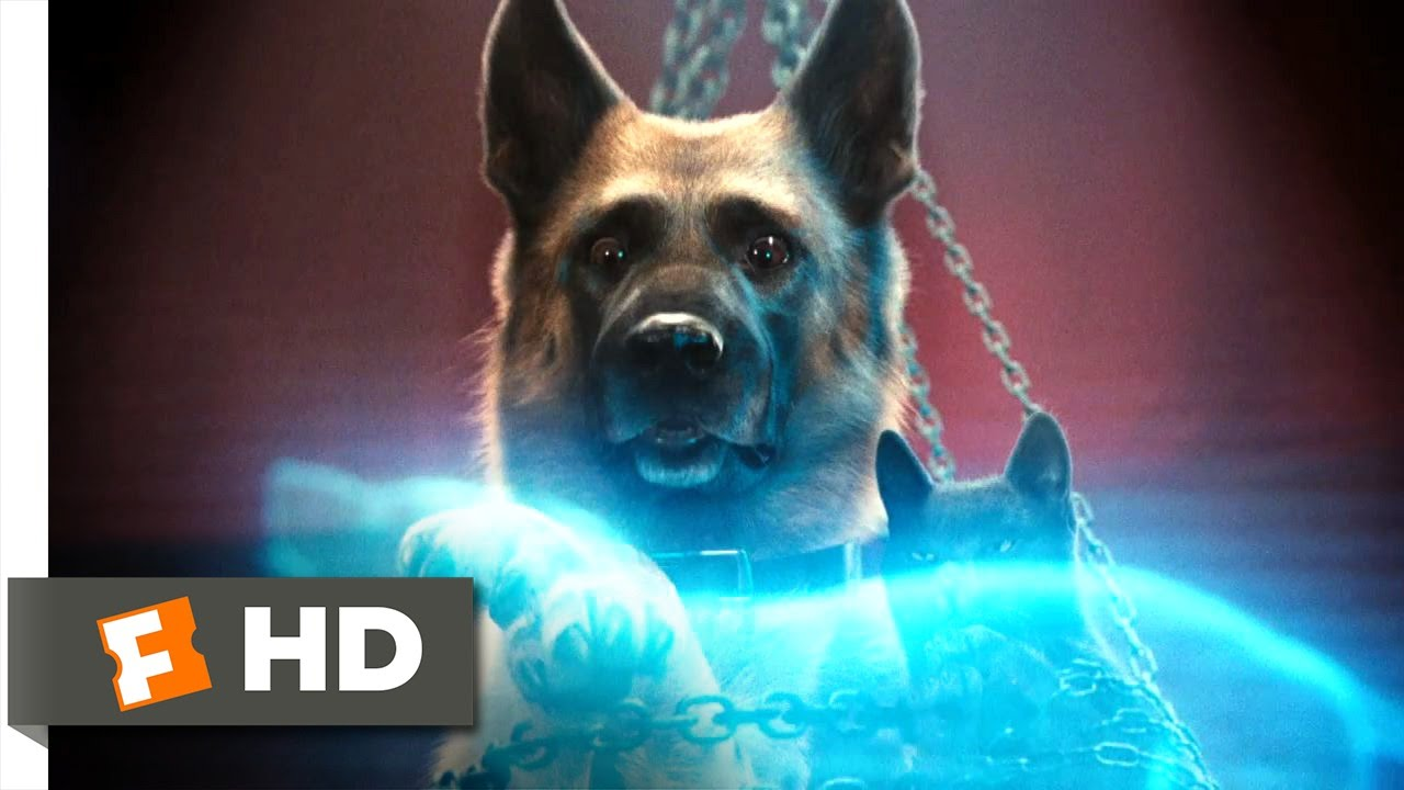 Cats \u0026 Dogs The Revenge of Kitty Galore 6 Movie CLIP , Kitty\u0027s Evil Plan  (2010) HD