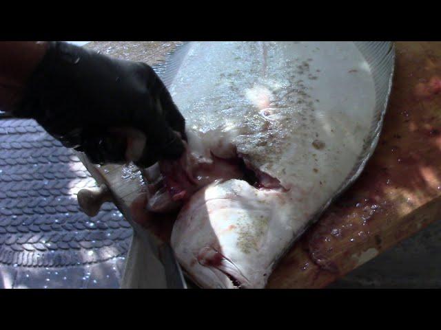 Làm Cá Lưỡi Trâu Biển Tại Nhà Ở Mỹ P1 Clean Flounder Fish - NVTC2 Ba Lam MVI2501 11/19/2019 11 AM