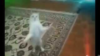 Коты танцуют дабстеп