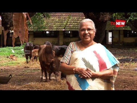 See Dr  Sosamma Ipe who preserves Vechoor Cows  - We Salute   Tv New