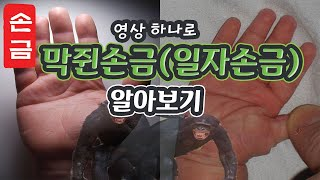 【손금】막쥔손금(일자손금)의 비밀. 막쥔손금=성공하는 …